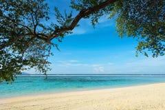 Green tree over tropical beach. Stock Photo