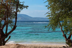 Green tree over tropical beach Royalty Free Stock Images