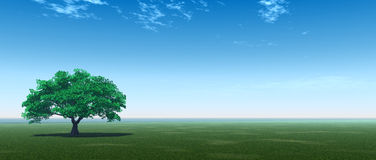 Green_Tree_P Image stock