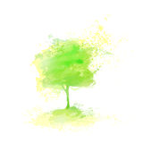 Green Tree Paint Splash Isolated Over White Royalty Free Stock Photo