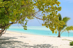 Green tree and palm on white sand beach. Maldives island. Royalty Free Stock Images