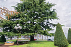 Green tree in a park in Evian-les-Bains in France Stock Image