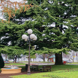 Green tree in a park in Evian-les-Bains in France Royalty Free Stock Photos