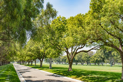 Green Tree Park Lane Royalty Free Stock Photography
