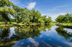 Green tree in park with reflection Stock Image