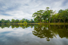 Green tree park with reflection on the water Royalty Free Stock Image