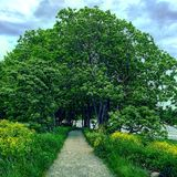 Green tree path sommer summer Royalty Free Stock Image