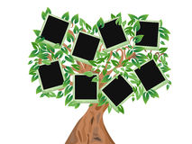 Green tree with photo frames Royalty Free Stock Photography