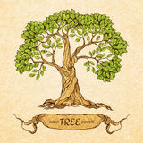 Green tree with place for text Royalty Free Stock Images