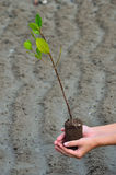 Green tree plant. Hand holding a little green tree plant Stock Image