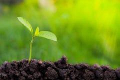 Green Tree Planting World Green .Green Tree Planting World Green royalty free stock photography