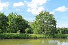 Green tree at the pond Royalty Free Stock Photography