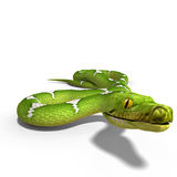 Green tree python. 3D rendering of a  green tree python with clipping path and shadow over white Stock Images
