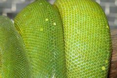 Green tree python skin Royalty Free Stock Photography