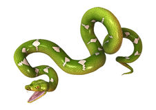 Green Tree Python on White Stock Images