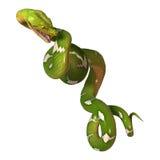 Green Tree Python on White Stock Image