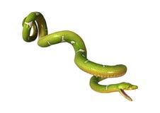Green Tree Python on White Stock Photography