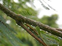Green tree. After rain Stock Image