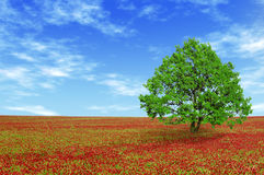 Green tree in red field Royalty Free Stock Photography