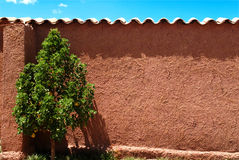 Green tree & Red Wall. Color and contrast: tree, wall and sky on the highlands of Peru Stock Photos