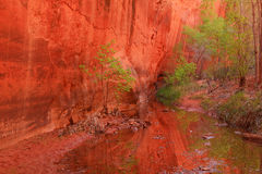 Green tree reflection in Neon Canyon. Stock Photography