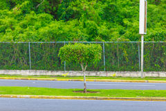Green tree on the road stock photography