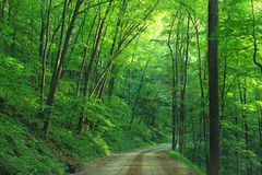 Green Tree Beside Roadway during Daytime Stock Image