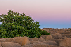 Green tree and rocks at sunset. In Mazagon beach Royalty Free Stock Image