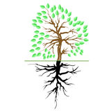 Green Tree with Root Royalty Free Stock Photo