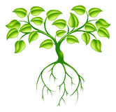 Green tree and roots. Green tree graphic design concept with long roots Royalty Free Stock Photos