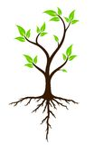 Green tree with roots. A logo of green tree with root system stock illustration