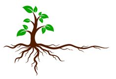 Green tree with roots. Logo of the green tree with the root system Stock Image