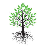Green Tree and Roots. Stock Images