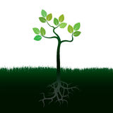 Green Tree and Roots. Vector Illustration. Royalty Free Stock Photo