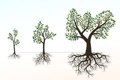 Green Tree with Roots. Vector Illustration. Shape of Tree and R royalty free illustration