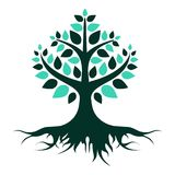 Green tree with roots on a white background. Vector Illustration. royalty free illustration