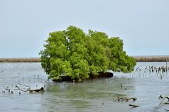 Green tree sea mangrove forest Stock Photo