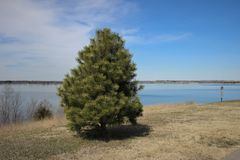 A green tree in the side of a blue lake. Under the blue sky Stock Photo