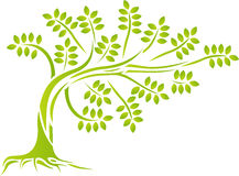 Green tree silhouette Stock Images