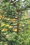 Green tree stock photos