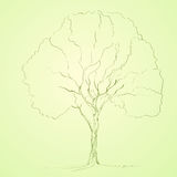 Green tree sketch line silhouette vector Stock Images