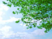 Green tree and sky Stock Image