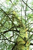Green Tree and sky royalty free stock photography