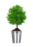 Green tree in small metal bucket isolated on white Royalty Free Stock Image