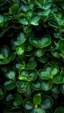 Green tree. Small ornamental plants have  beautiful designs Royalty Free Stock Images