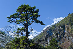 Green tree and snow mountain Stock Photography
