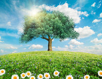 Green tree spring landscape Royalty Free Stock Photo