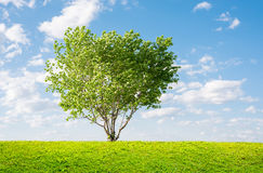 Green tree spring landscape Royalty Free Stock Image