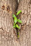 A green tree sprout growing Stock Image