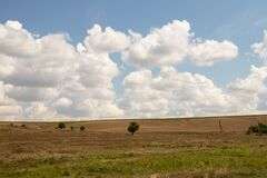 Green tree stands in poly in a beam on the background of yellow dry grass and clouds in the sky in ukraine in the dnieper city in